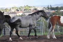 horsesense2