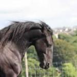 horsesense3